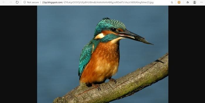 Bing es mejor que la imagen horizontal Google Bing Scroll Imagen completa